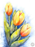 Tulips by pica-ae