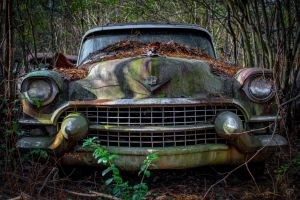 Swamp Caddy by FabulaPhoto