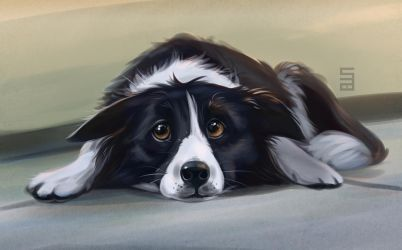 Border Collie by Seanica