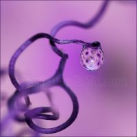 I am purple by dini25