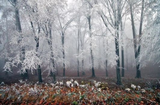 Signs of Winter.2 by sagefille20