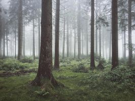 Forestscape by Noirerora