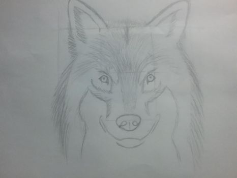 Wolf by crazycat1425