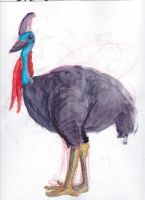 Cassowary Watercolor by august-macias