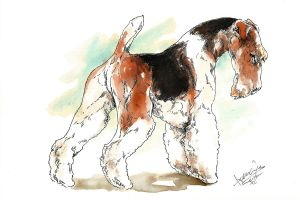 Fox terrier by bull-terrier