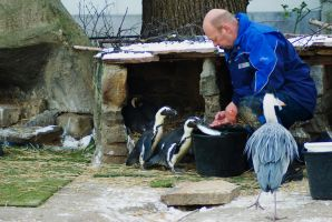 Handfeeding the penguins by steppeland