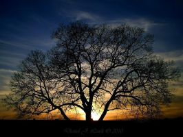 Branching Out by Dan0128