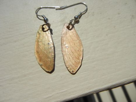 Cicada wing earrings by modastrid