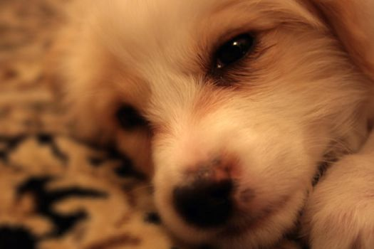My PuPPy by lordofpersia