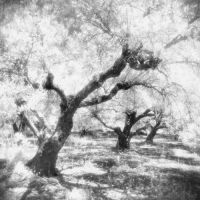 Into the Olive Grove II by Mohain