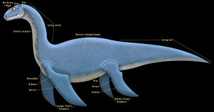 Sea Serpent Anatomy 4 (Plesiosaur) by horse14t