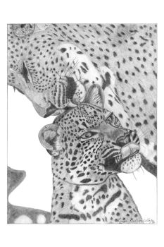 Leopards by GuitarWars