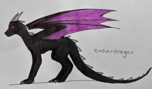 Enderdragon by lifewatery