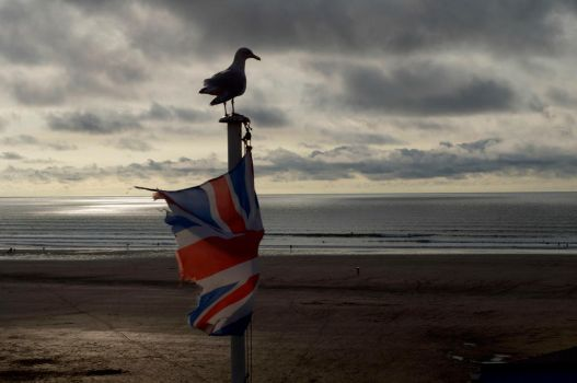 Patriotic Seagull by MoshCow