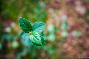 New Life by Linsenmodus