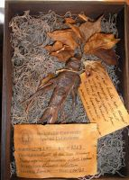 Mandrake with labels by HerbertW