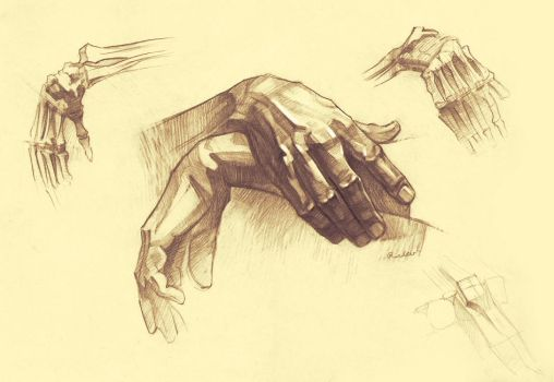Anatomy of hands by RichterBach