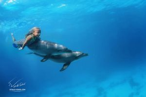 Super Lu and dolphins by Vitaly-Sokol
