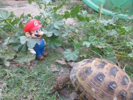 Mario and a Russian Tortoise by SonicClone