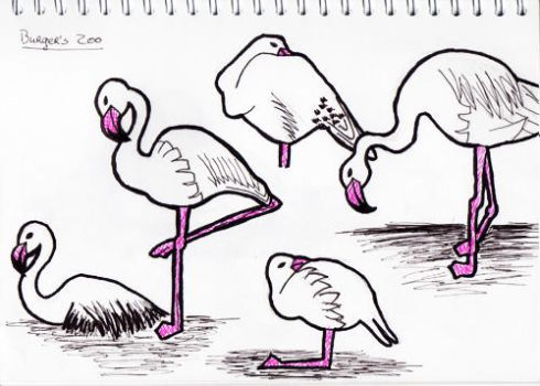 Sketches: Flamingos by nancy-kelpie