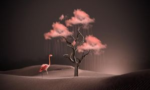 Flamingo by ditney