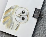 Barn owl sketch by anguana