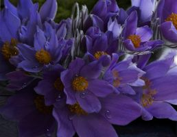 Spring Flowers Png 1 By Vladlena111-d8sgus8 by velcrowmistress