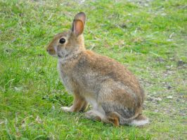Beautiful Bunny by Photos-By-Michelle