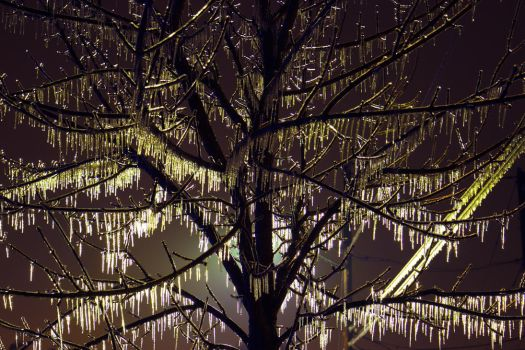 Treesicle by compman67