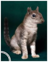 Squirrecat by HumanDescent