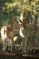 Deer Stock 34 by Malleni-Stock