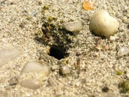 Ant Hole by Dowlphin