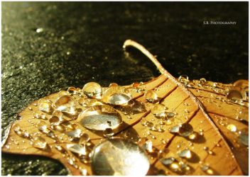 Water drops by selley