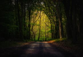 In the woods IX by MoonKey19