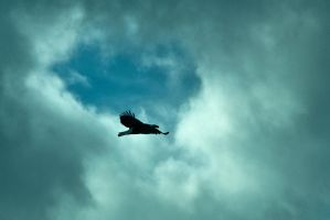 Eagle in a Patch of Blue by quintmckown