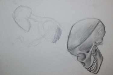 Skeleton study 1 by Evinfowler
