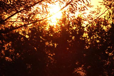 Sunset through the leaves by Meterious