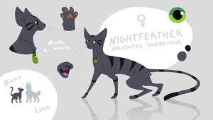Nightfeather Reference | Current by Nightfeather123