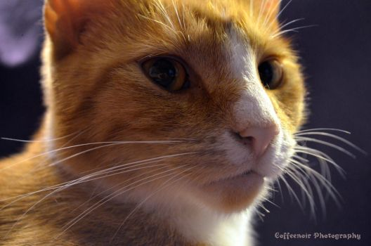 Fry Close up by coffeenoir