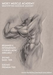 Want to Learn How to Draw Muscle? by MoxyDoxy