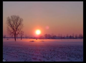 Winter at home_the farm by sophismi