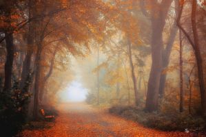 Lost In A Moment by ildiko-neer