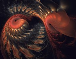 The dance of the Nautilus by eReSaW