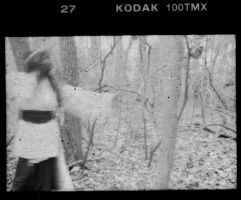 In the Woods No. 5 by sedge