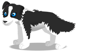 border collie A by PurpleRat-YS