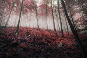 the forest of my dreams by JoannaRzeznikowska