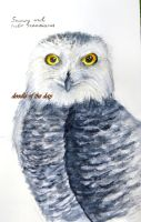 #227 Snowy owl by LateAMdoodles