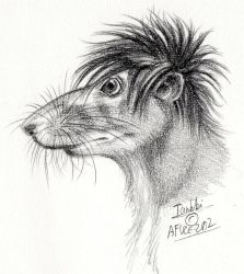 Tankki the rat, as realistic furry by Afuze