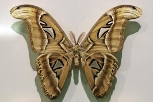 Moth Stock 13 (private use) by Malleni-Stock