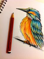 Kingfisher Doodle by artbox99